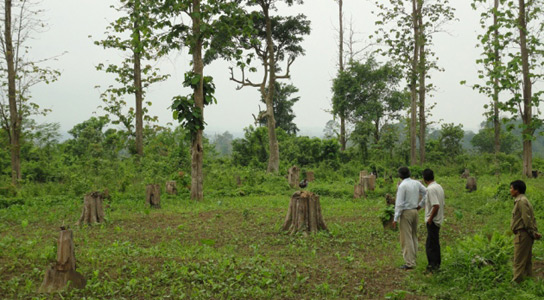 essay on need of forest conservation