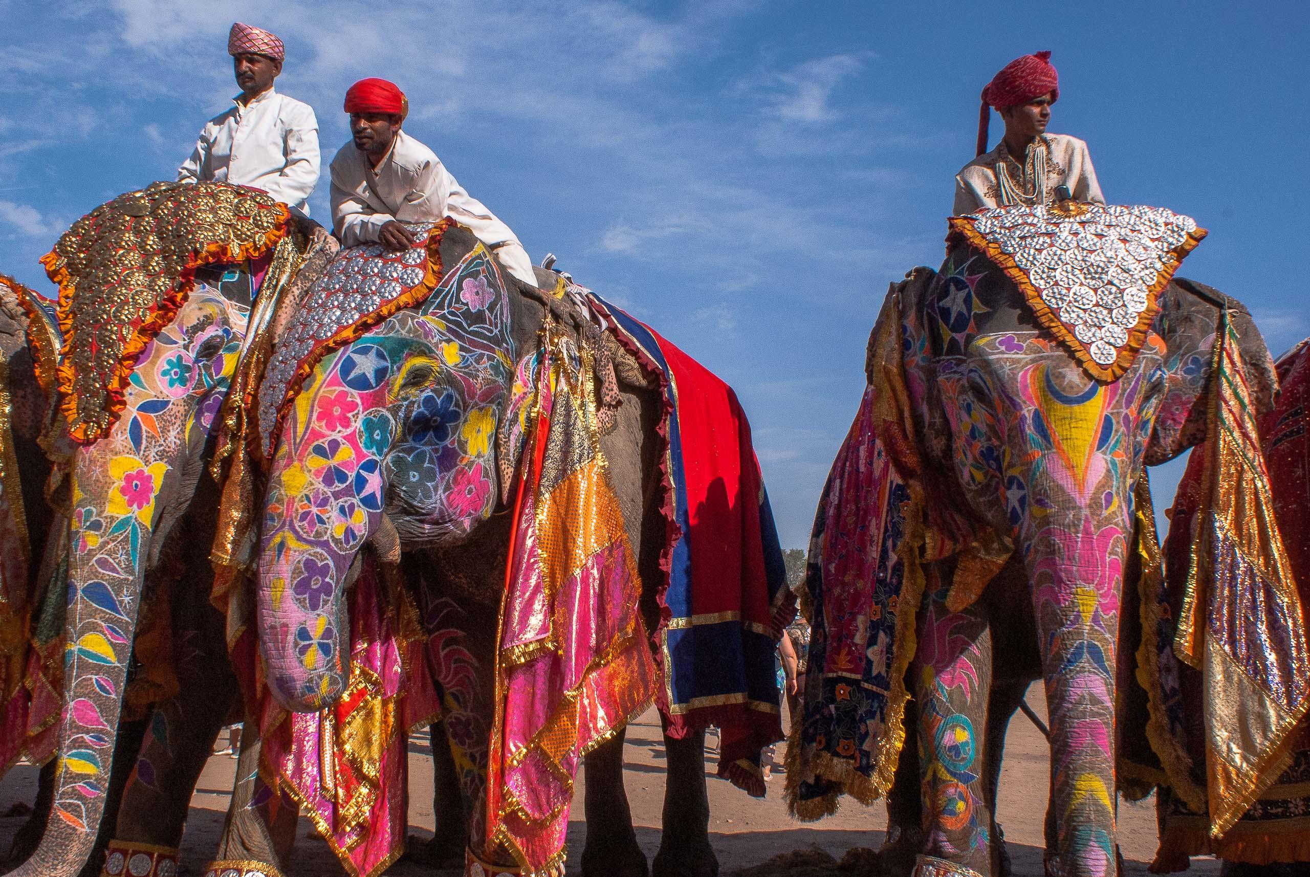 Индийский или азиатский слон – один